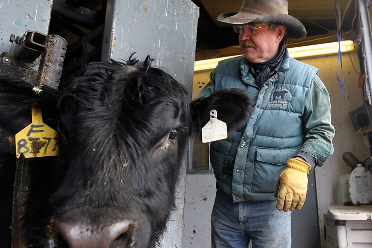 Randy Stevenson at his Double S Livestock backgrounding operation in Wheatland, Wyoming. Stevenson used to run a small feedlot selling directly to meatpackers, but says he got forced out of that business.