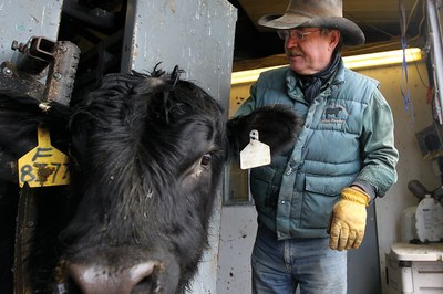 Cattlemen struggle against giant meatpackers and economic squeezes