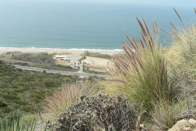 An overlook at Point Mugu State Park, where fountain grass, with its showy red heads, is pushing out the native plants.