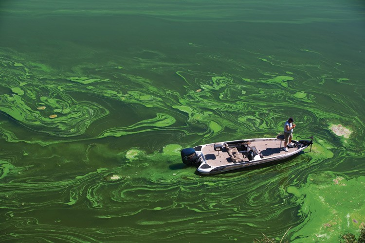 A bass fisherman casts a line into the algae-clogged waters of the Iron Gate Reservoir, March 2009, in the Klamath River Basin.
