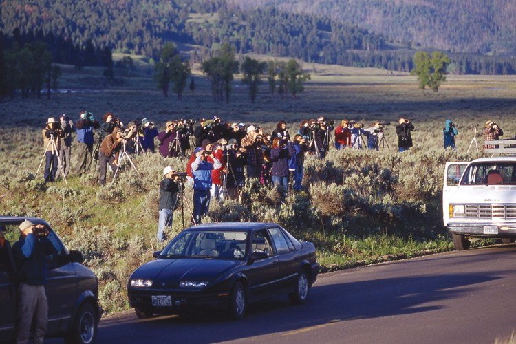 Wolf watchers at Soda Butte Creek in the northeast corner of Yellowstone National Park.