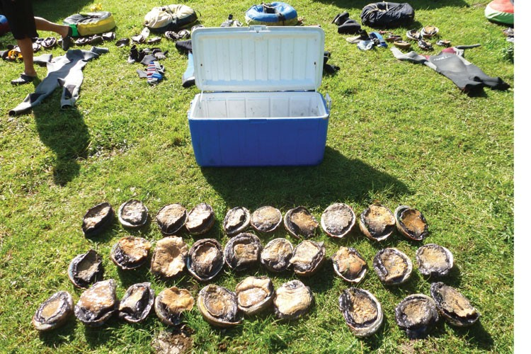 Some of the 73 abalone seized last month from six divers.