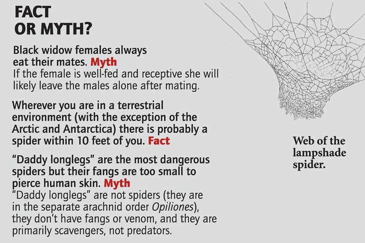 Spider facts and myths