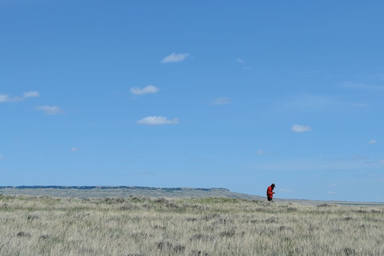 A visitor prospects the grassland south of Ekalaka, Mont., for prehistoric remnants from the Western Interior Seaway.
