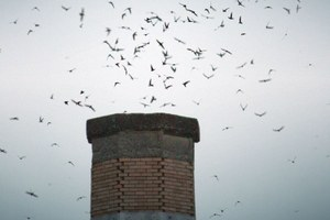 Save a chimney, save a swift