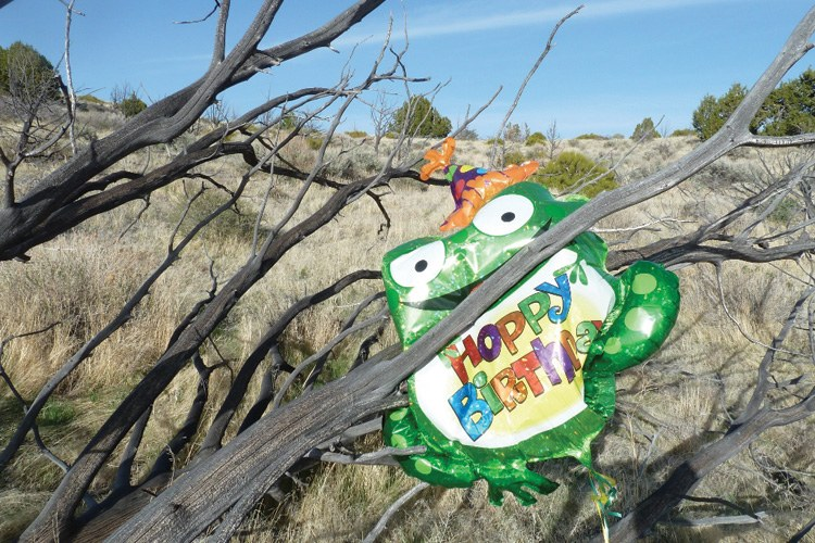 A mylar balloon, trapped in Nevada's high country