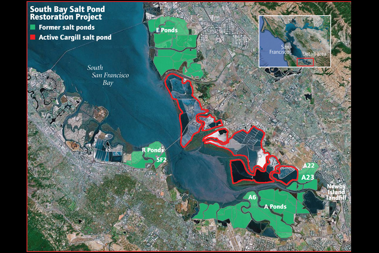 The Salt Pond Puzzle Restoring South San Francisco Bay Of Birds