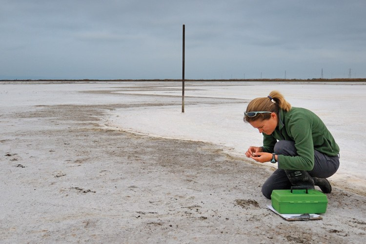 Caitlin Robinson-Nilsen examines a snowy plover egg at the E Ponds in the South Bay.