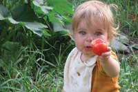 Love and tomatoes -- a natural combination