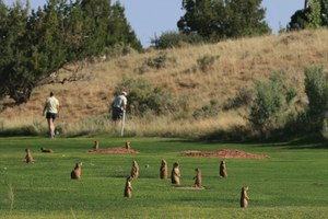 Saving threatened Utah prairie dogs -- on private property