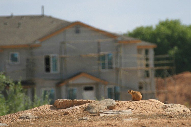 Cedar City, Utah, where urban development impacts Utah prairie dogs, whose diminished range overlaps with private land. The habitat credit exchange pays willing landowners to protect prairie dogs in order to mitigate development on habitat elsewhere.