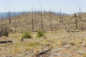 Fire scientists fight over what Western forests should look like