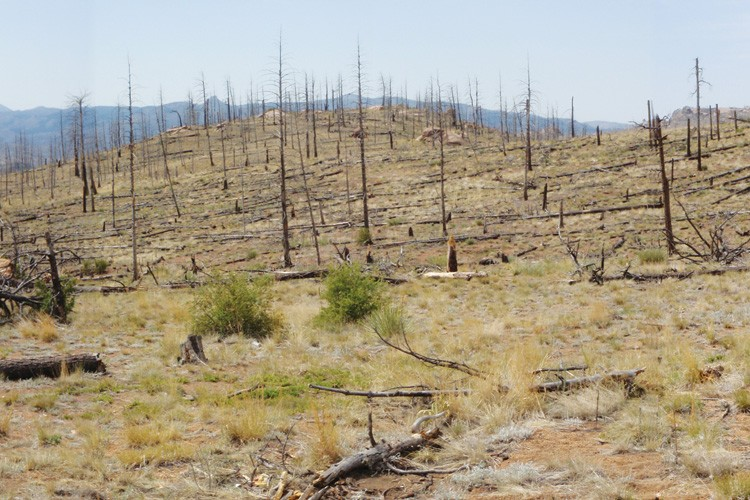 Blackened stumps surround Cheesman Lake in Colorado 10 years after the 2002 Hayman fire, the largest in the state's recorded history, swept through the area. A controversial new study says severe fires like this one are more normal than previously thought.