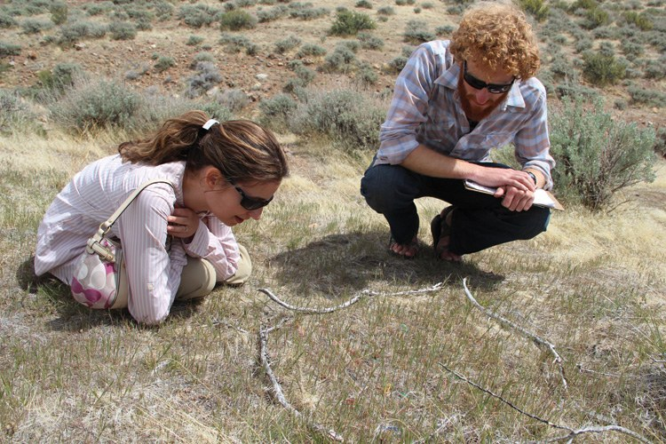 Beth Leger and Owen Baughman study a test plot of cheatgrass on Peavine Mountain outside Reno, Nevada.
