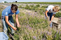 Native plant growers face many challenges