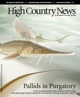 Pallids in Purgatory