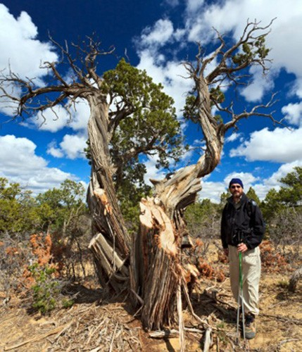 A man stands next to a partially-poached Juniper tree.