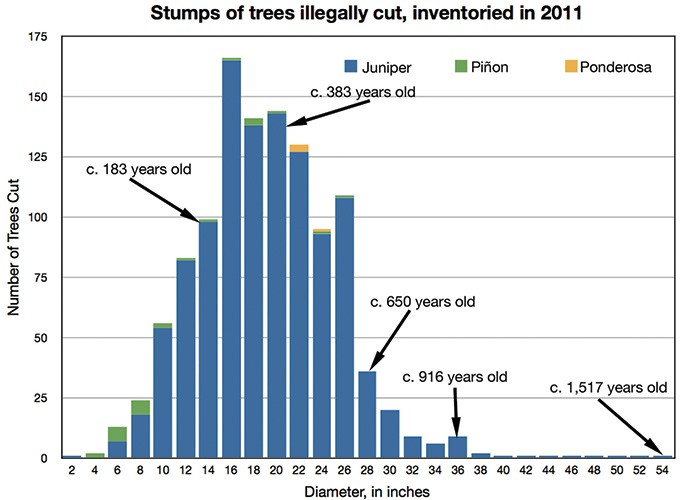 Estimated ages of trees based on Rocky Mountain juniper growth rates provided in the field office's draft resource management plan. Based on data from the BLM's Rio Puerco Field Office.