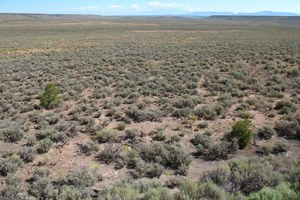 Student essay: Lost and found in the sagebrush