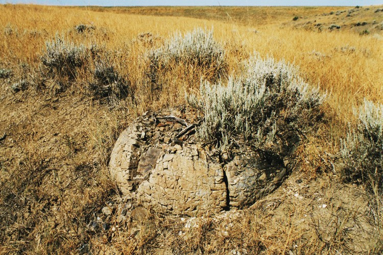Concretions -- balls of sedimentary rock that formed around some kind of nucleus -- like this one near Ingomar, Montana, often contain fossils.