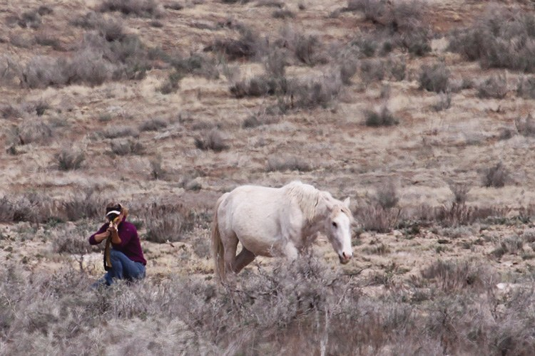 T.J. Holmes takes aim at a wild mare on the range in Disappointment Valley in southwestern Colorado, using darts loaded with PZP, a substance that makes mares infertile for a year. She never misses.