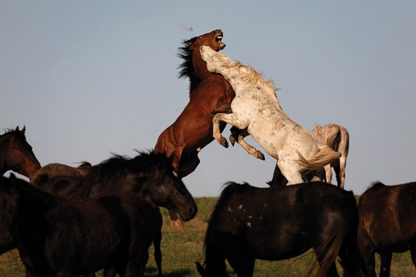Is there a way through the West's bitter wild horse wars