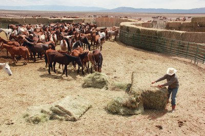 """BLM """"ecosanctuaries"""" unlikely to provide relief for wild horses"""
