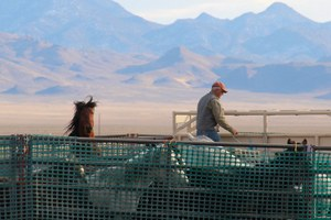 Feds reluctant to kill wild horses