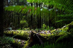 A Washington tribe and a timber company wrestle over a forest's future