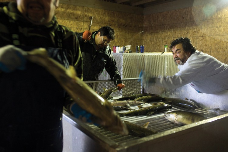 Workers Ben Ives, right, and Jeff Fulton, center, whack female chum salmon on the head before gutting them for eggs for a manmade spawning. The tribal members incubate the salmon eggs with a mixture of river water and salmon semen before pumping the concoction back into the bay for the next season's generation.