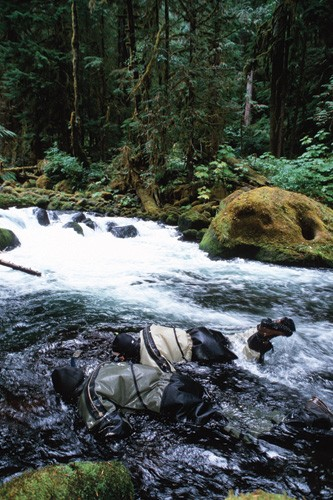 Forest Service divers look for bull trout in Washington State.