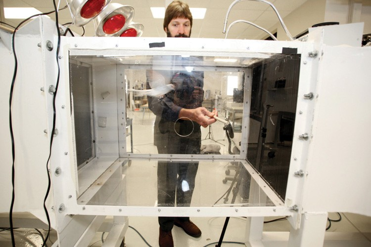 Bret Tobalske uses a wind tunnel at the Montana Flight Lab to track the movement of misty air around a diamond dove.