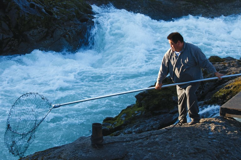 A Wet'suwet'en man fishes for salmon on a tributary to the Skeena River near Moricetown, British Columbia.