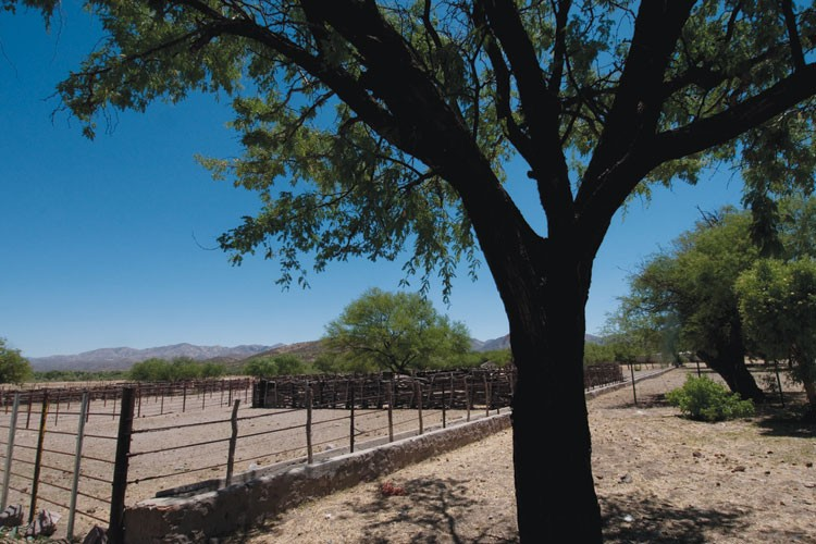 Corrals at Rancho El Aribabi, part of the cattle operation Carlos Robles Elías is hoping to replace with high-end hunting and ecotourism.