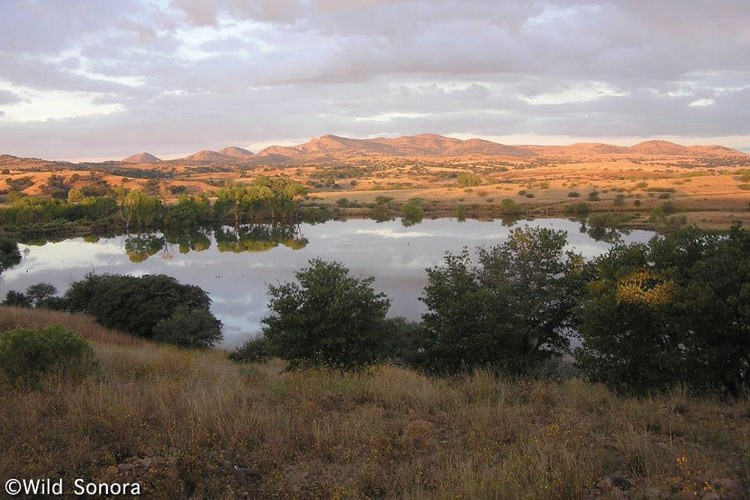 Rancho Los Fresnos is a 10,000-acre project of Naturalia and The Nature Conservancy.