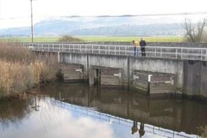 Balancing fish and farms on a Washington estuary