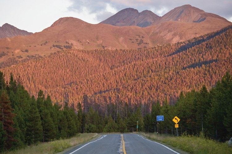 Beetle-killed trees in Colorado's Never Summer Mountains near Gould.