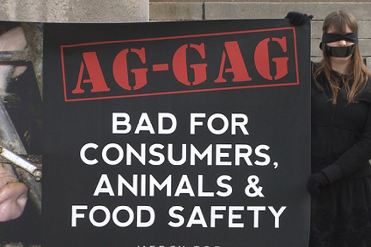 "The so-called ""ag gag"" effort spread from the Midwest to Utah, where it's now a crime to use a camera while trespassing on a farm or ranch."
