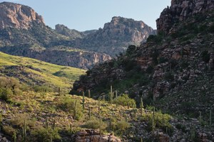 Book review: A Natural History of the Santa Catalinas, Arizona