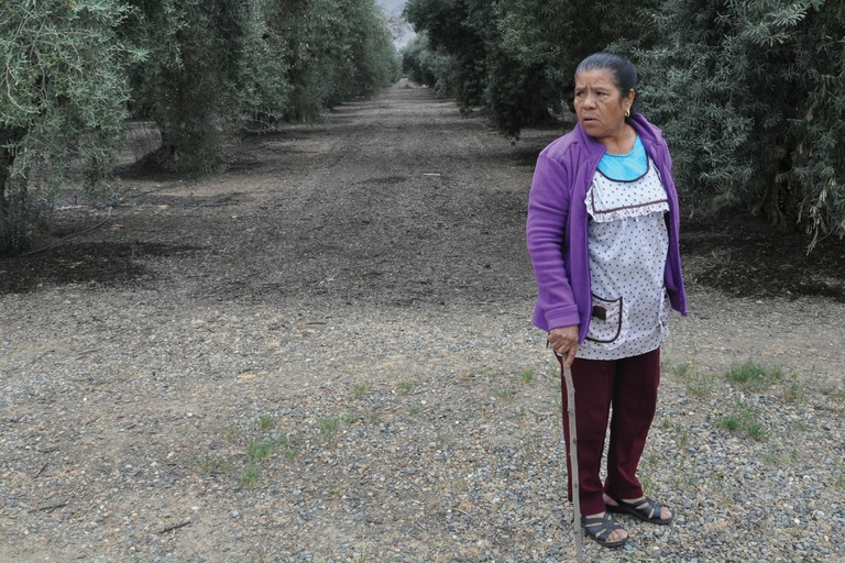 Senaida Aguilar walks through the olive orchards where she works near her home in Tonyville.