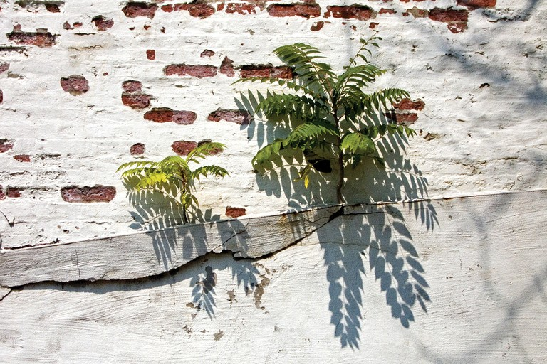 Trees grow out of a Baltimore, Maryland, wall.