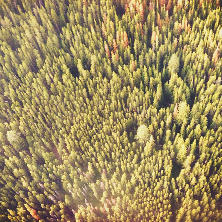 """With my forehead pressed firmly against the plexiglass window of the helicopter I tried to process everything I was seeing. Out to the right side there was thousands and thousands of luscious green lodgepole pines with the occasional crunchy brown pine beetle destroyed version of the pine. Out to the left was a charred and smoke covered plane that was coated with thousands of 100-foot-tall black sticks."""