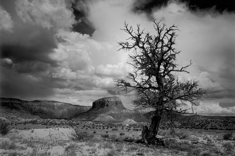 Black Tree and Orphan Mesa, Late Summer, Ghost Ranch, New Mexico, 2005.