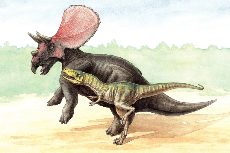 "Artist's conception of the ""Dueling Dinosaurs"" found in Montana."