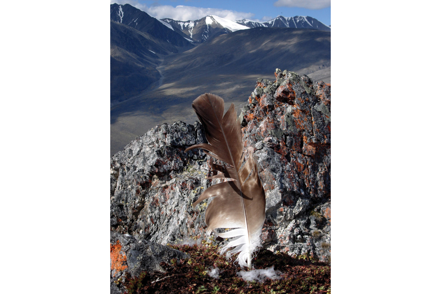 marginalia an essay marginalia high country news eagle feather at roost on the hulahula river