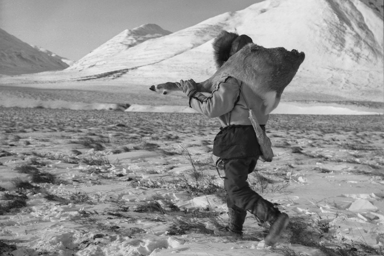An Eskimo hunter carries the haunch of a caribou, Anaktuvuk Pass, Alaska, c. 1962.