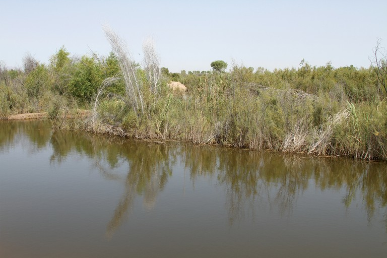 A salt cedar-choked area of the Colorado River Delta before it was restored.