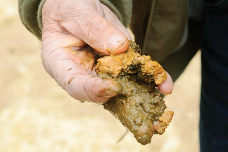 A handful of mud from the Elk Tunnel Mine's limestone channel.