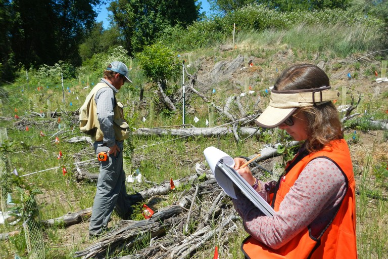 Staff of The Freshwater Trust gather pre-project baseline data to determine the best location and mix of trees and shrubs to be planted along a tributary of the Rogue River as part of Medford's water quality trading program.