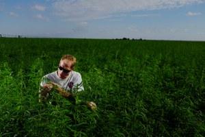A Colorado carpenter takes a chance on hemp
